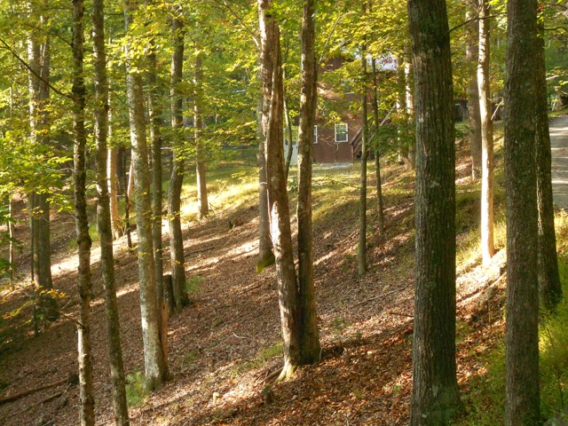 Understory removal adds to defensible space