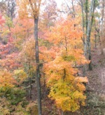 Fall beauty of eastern hardwoods
