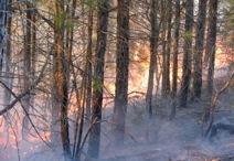 Wildfire in eastern hardwoods